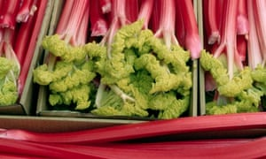 Forced rhubarb on sale in Yorkshire