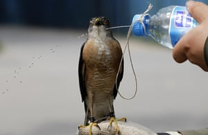 24 hours: Beijing, China: A Chinese man sprays water on his pet Besra at a park