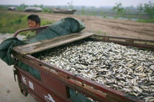 24 hours: China: A fisherman rides a motor tricycle to transport dead fish