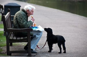 In pictures: expectation: Dog looking at man's fish and chips