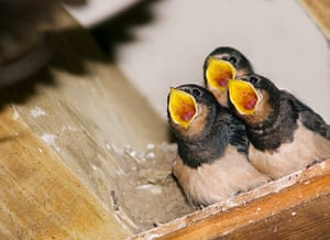 In pictures: expectation: swallows