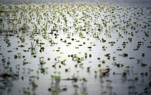 FTA Mario Tama: Flooded young crops are seen along the Yazoo River near Yazoo City