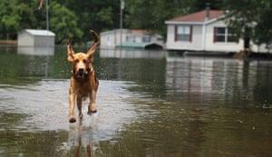 FTA Mario Tama: A neighbourhood dog runs through the floodwaters