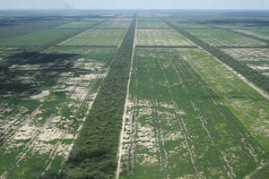 Deforestation for soybean: Chaco, Paraguay