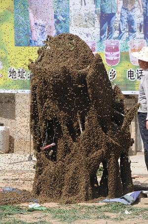 Bee suit: Man breaks record for heaviest bee suit