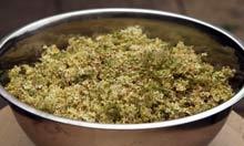 how to make elderflower champagne