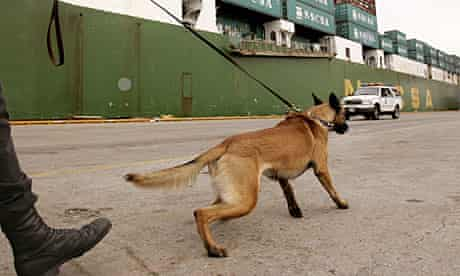 Seal Team 6's canine member could be a Belgian Malinois, like Ruud of US homeland security
