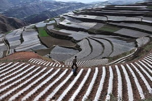 24 hours in pictures: A farmer walks past a terrace of codonopsis pilosula, China