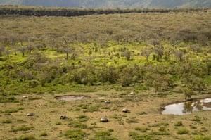 Galapagos : galapagos tortoise