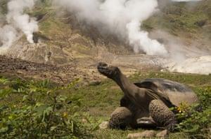Galapagos : galapagos tortoise steam