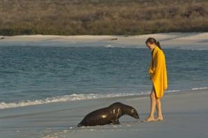 Galapagos : galapagos sea lion