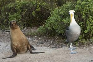 Galapagos : galapagos sealion albatross