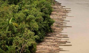 Confiscated illegally logged timber floats down the Guam river delta in Para, Brazil