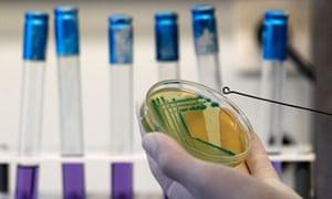 Laboratory work on E coli in Sofia