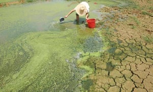 china farmer water shortages algae pond