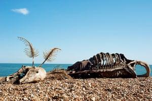 Folkestone Triennial: The Sea Monster by Charles Avery