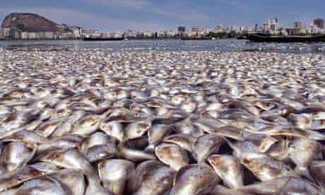 Dead fish in sea off Rio de Janeiro