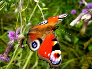 Been there June: Butterfly