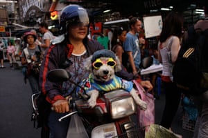 Been there June: Dog, Bangkok