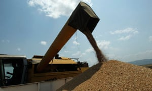 A worker operates a combine to reap wheat in a field near the village of Tsnori