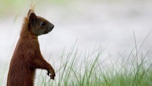 Week in wildlife: A squirrel