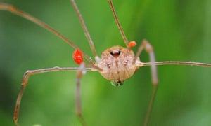 Week in wildlife: -