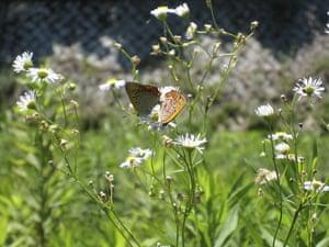 Week in wildlife: JAPAN-BUTTERFLY