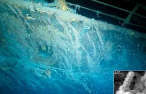 New species: Bacterium on the Titanic