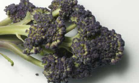 Garden week: Purple sprouting broccoli