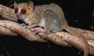 600 new species found in Madagascar