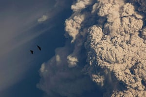 Puyehue volcano : Birds flying near theplume of ash rising from the volcano