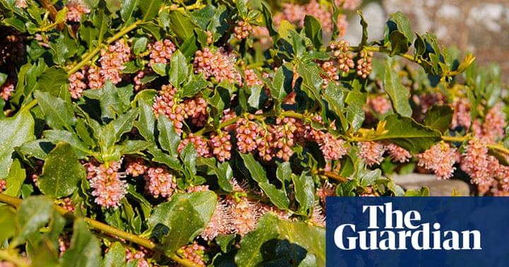 Gardens: Top 10 climbers | Life and style | The Guardian