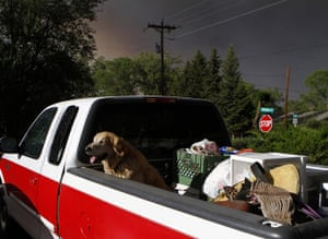 Arizona Wildfires: A dog sits in the bed of a pick-up truck