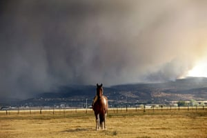Arizona Wildfires: A horse stands in the middle of a field