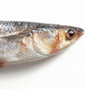 Literary picnics: grey mullet fish
