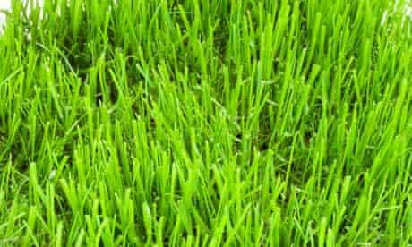Garden week: Grass