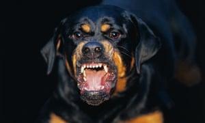 Vicious Rottweiler