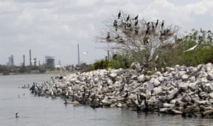 Week in wildlife: Ship Channel Birds