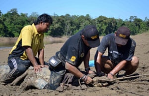 Week in wildlife: DGFC and Wildlife Rescue Unit staff securing a crocodile's mouth
