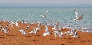 Week in wildlife: CHINA-SHAANXI-YULIN-ENVIRONMENT-HABITAT-RELICT GULL (CN)