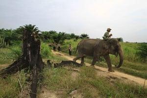 Week in wildlife: the Gunung Leuser National Park in Sumatra island