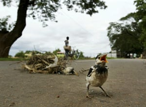 Week in wildlife: A myna fledgling cries on a road after its nest fell off