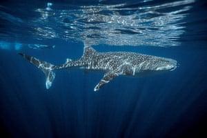 Week in wildlife: Ningaloo Coast Included in UNESCO World Heritage List