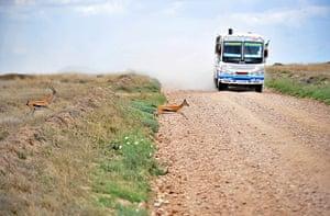 Week in wildlife: Serengeti national reserve