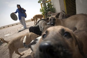 FTA: Behrouz Mehri: A volunteer helps to feed the dogs at the Vafa animal shelter