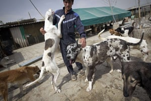 FTA: Behrouz Mehri: Stray dogs play with Akbar, one of the employees the Vafa animal shelter