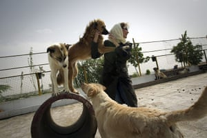 FTA: Behrouz Mehri: A dog lover plays with the strays at the Vafa animal shelter