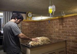 FTA: Behrouz Mehri: A dog receiving treatment for lumbar disc degeneration