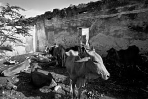 Somalia by Robin Hammond: Farmers have brought their families and surviving animals in to Mogadishu