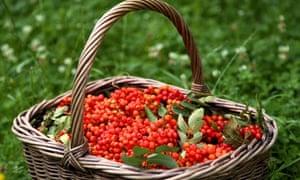Rowanberries